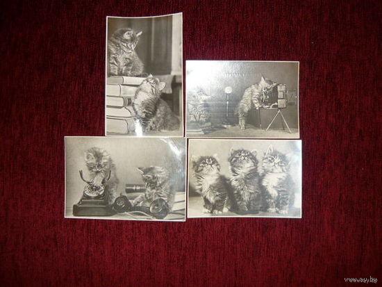 Почтовая карточка;Котята ,1956г.