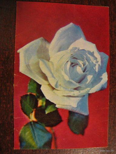 Цветы двойная 1972г.