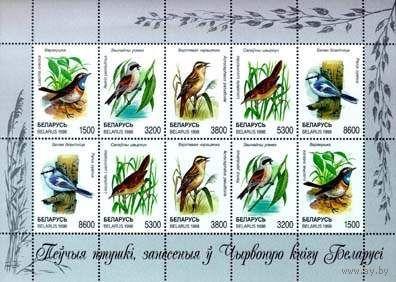 МЛ Певчие птицы