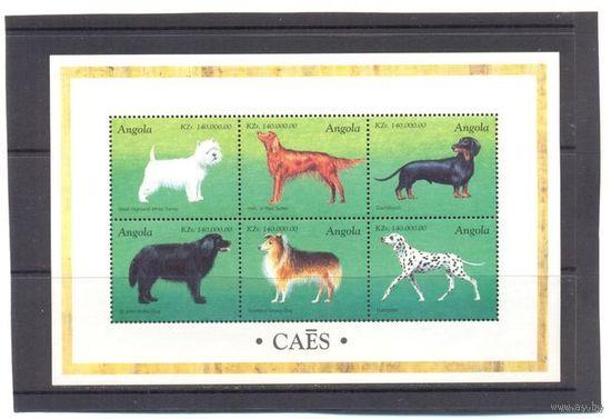 Ангола фауна собаки