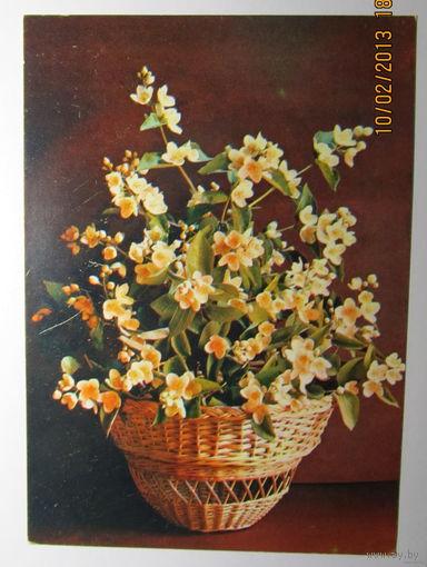 "Открытка  ""Жасмин"",1981 г.,фото Г.Костенко,чистая"