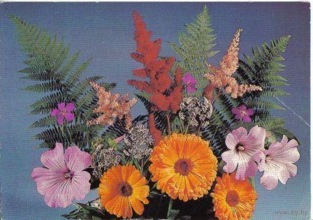 Цветы. Фото Б.Круцко