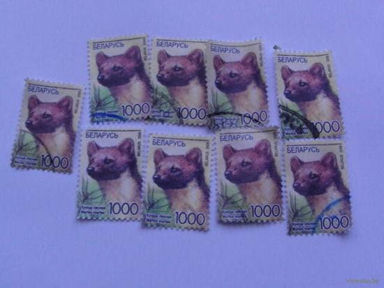 Беларусь марки 2008г Куница лесная.  распродажа
