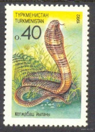 Туркменистан фауна змеи
