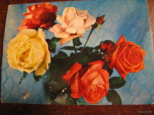 Цветы 1977г